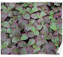 Leaf Patterns Poster
