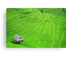 Rice field terraces Canvas Print