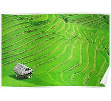 Rice field terraces Poster