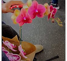 Hello...Did You See Those Orchids On The Bus? by Michael May