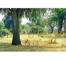 Zambia Bush  Photographic Print