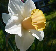 Amazing Spring by Hekla Hekla