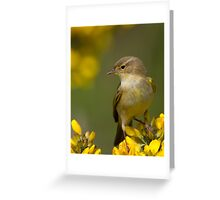 Male Willow Warbler Greeting Card