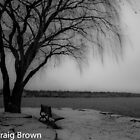 Lonely Tree by Craig Brown