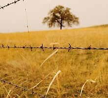 Tangled in Barbwire by kristijohnson