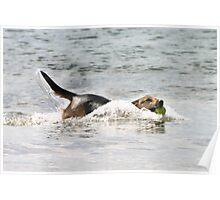 Canine fun in the Sea Poster