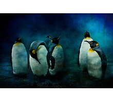 Cold Penguins Photographic Print