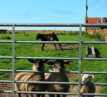 Farm Animals by Catriona  Crawford