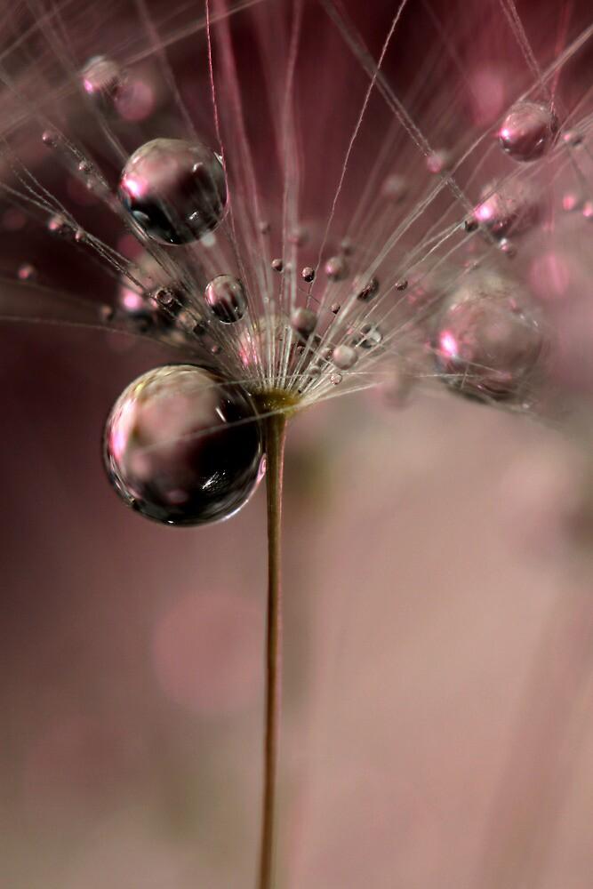 Bubblicious by Sharon Johnstone