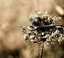 In the Thistle and Weeds by sarafahling