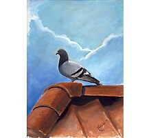 Pigeon on Roof Photographic Print