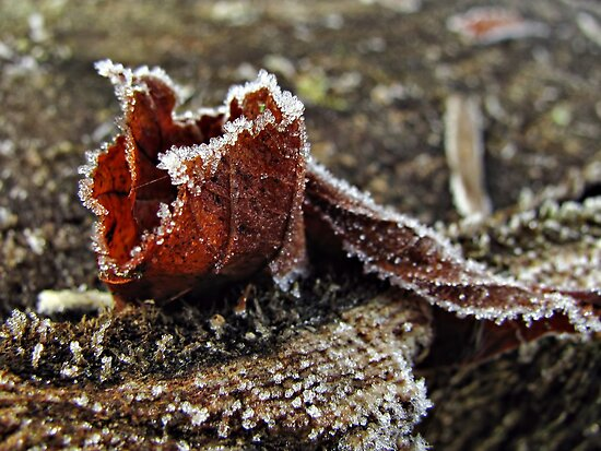 First Frost by Marina Herceg