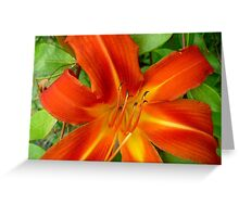 Orange Lilly Greeting Card