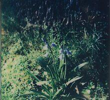 Gradually Blue by Jill Auville
