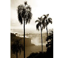 Iguazu palms Photographic Print