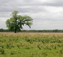 Solitary Tree by Capt. Charles McKelroy