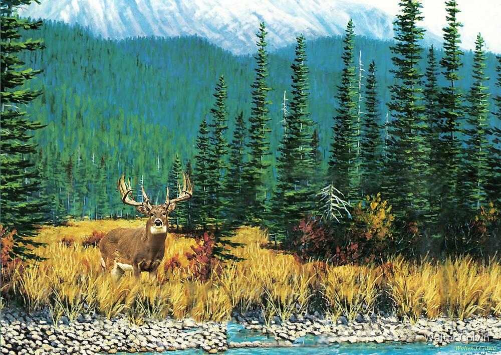 Mountain Mule Deer by Walter Colvin