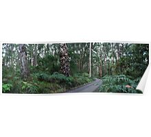 Otway Forest Poster