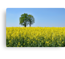 Rapeseed Canvas Print