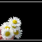 Daisies for YOU! by Rose Santuci-Sofranko