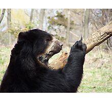 FLUSHING ZOO BEAR Photographic Print