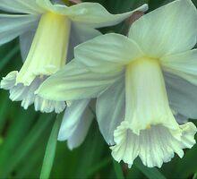 Springtime Cheer (for Victoria Sheldon) by vigor