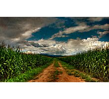 Fields Of Summer Photographic Print