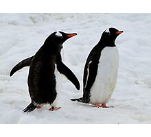 Penguins on parade Photographic Print