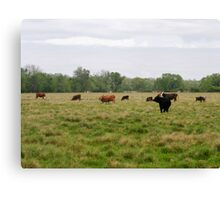 Cattle Ranch Canvas Print