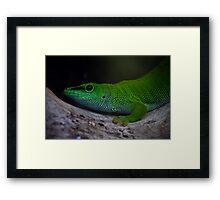 Green Gecko Framed Print