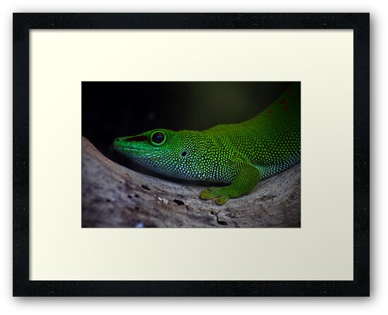Green Gecko by julestownsend