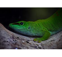 Green Gecko Photographic Print