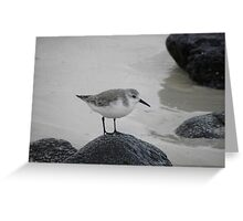 Sanderling on Rock Greeting Card