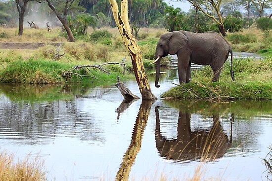 African Elephant, Serengeti National Park, Tanzania by Carole-Anne