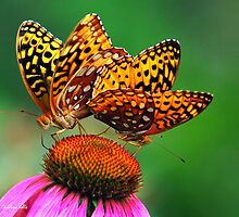 Colorful Butterfly Twins by Christina Rollo