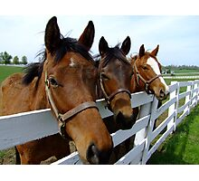 The Yearlings Photographic Print