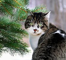 Hazel Eyes and Pine by Christina Rollo