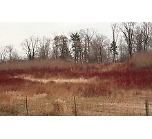 Dogwood red Photographic Print