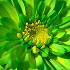 Green Beauty by Valerie Henry