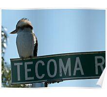 Kookaburra On Tecoma Poster