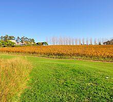 Tarrawarra Vineyard, Victoria Australia by Chris Jones