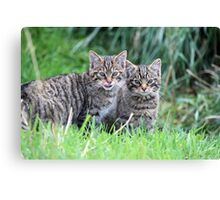 Wildcat Kittens Canvas Print
