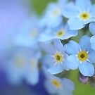 Forget Me Not  by Lena Weiss