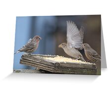 Ready to fly Greeting Card