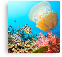 Butterflyfishes and jellyfish Canvas Print