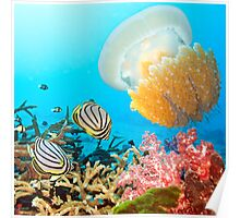 Butterflyfishes and jellyfish Poster