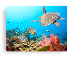 Butterflyfishes and turtle Canvas Print