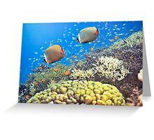 Red-tailed Butterflyfishes Greeting Card