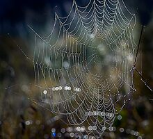 Web in Waiting by Dianne English