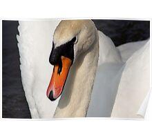 Elegant Swan. Poster